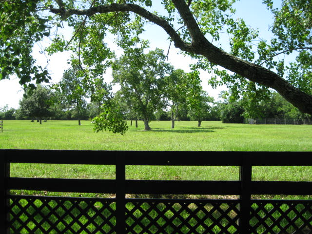 pasture-backyard-view3-6-2014.jpg